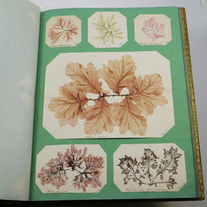 [Seaweed] | An exceptional Victorian seaweed album