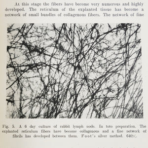 McKinney, Roscoe Lewis | Studies on Fibers in Tissue Culture III