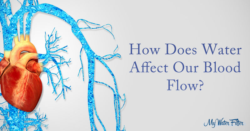 How water effects your blood flow