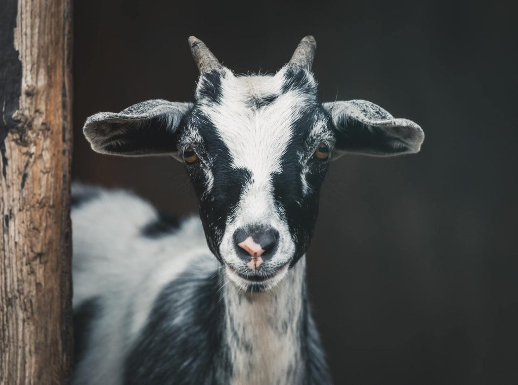 Goat Biosecurity