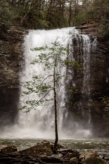sustainable tree with waterfall behind