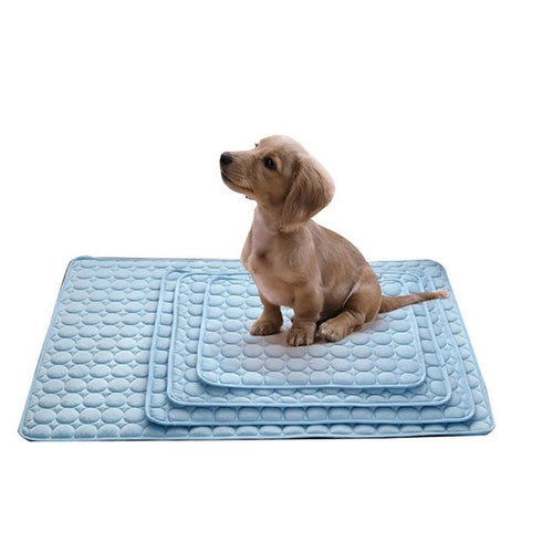 Dog sitting on a blue cooling cushion