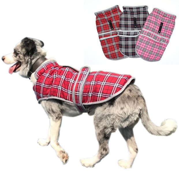 Dog wearing red and white jacket vest
