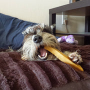 Dog chewing on EcoKind Gold Yak Dog Chews