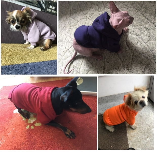 Dogs wearing Warm sweater dog hoodies collection