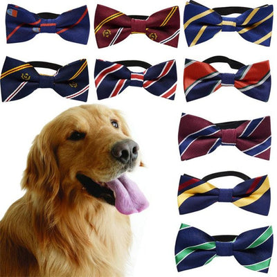 Dog with mutiple classic striped bow tie collars