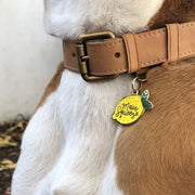 Main squeese lemon shaped dog tag on collar