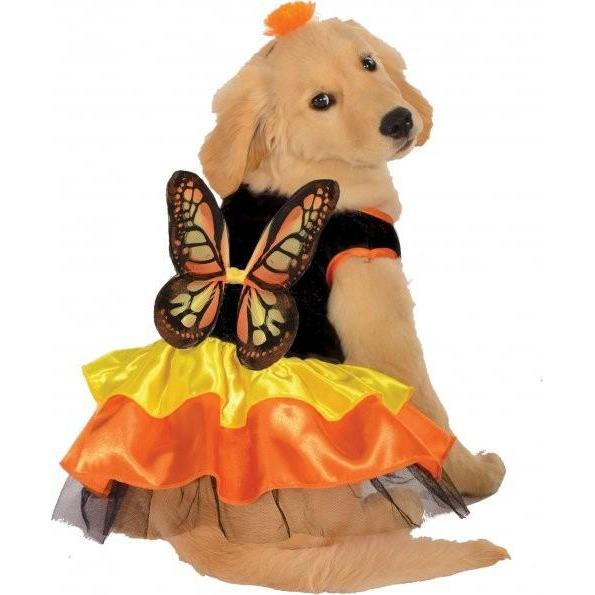 Dog wearing a butterfly costume