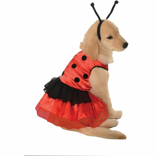 Dog wearing Ladybug dog costume