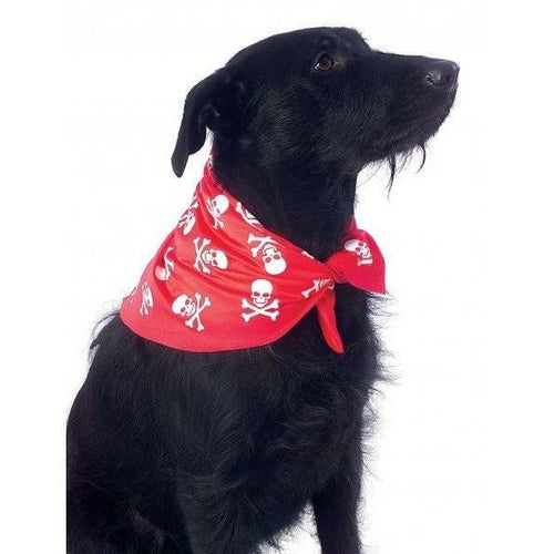 Dog wearing a Skulls and Bones Bandana