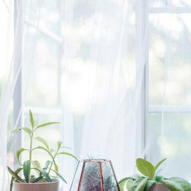 4 Stylish Houseplants the Barn & Willow Team Keeps on Their Windowsills article image