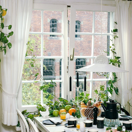 5 Simple Ways to Bring the Outdoors Inside article image