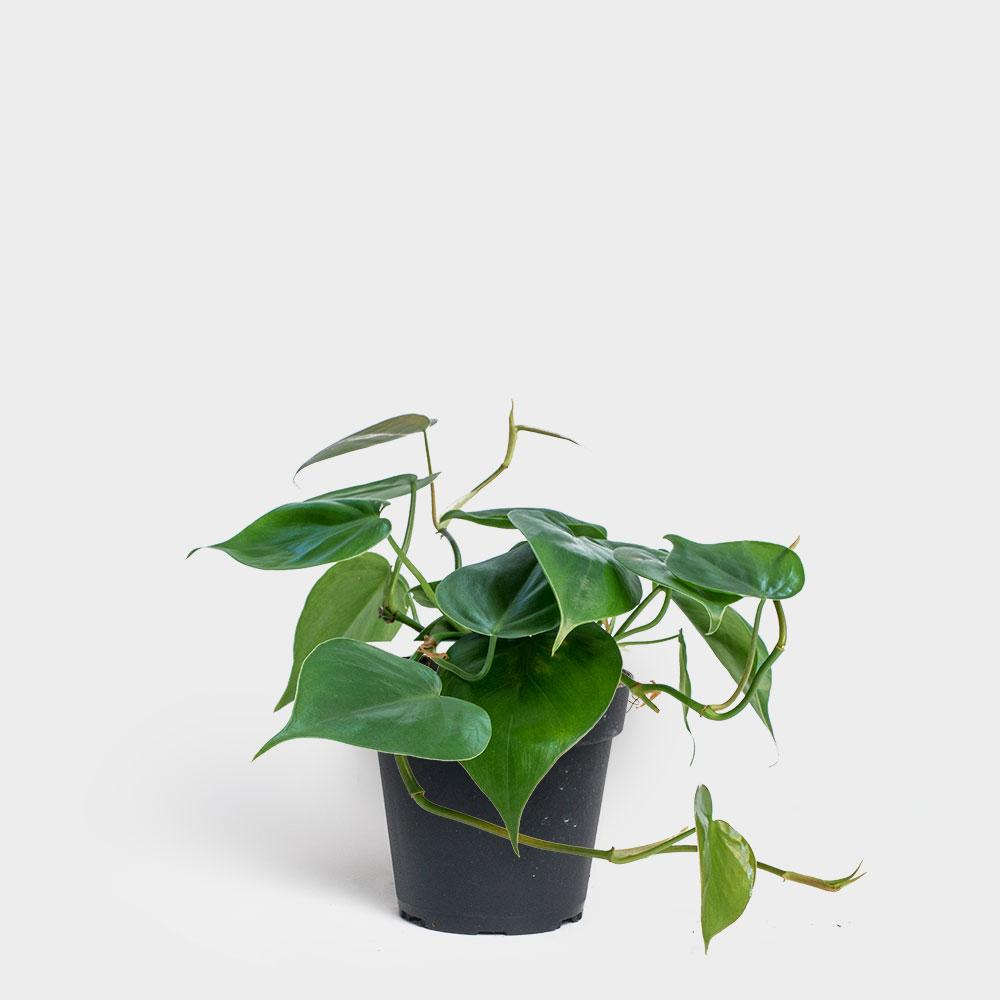 plant, wellness, home decor