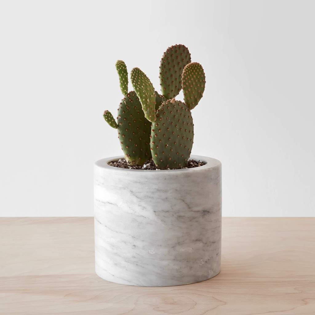 Cactus in a marble pot, home decor