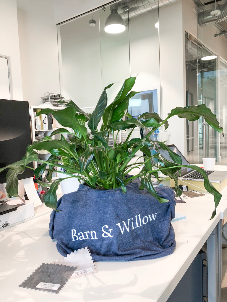 A green plant in a t-shirt at the Barn & Willow headquarters.