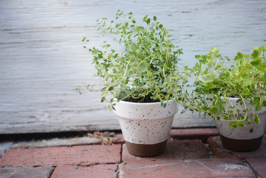 DIY, home decor, speckled white pot, DIY pot, dipped potted plant