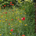 Plant a meadow!