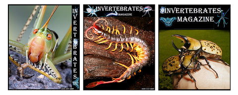 Invertebrates-Magazine and More