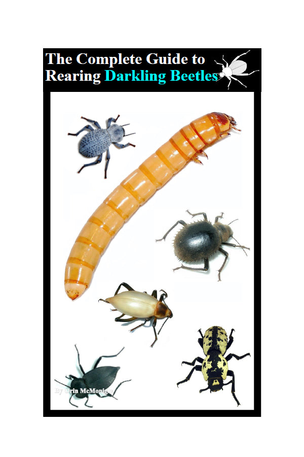 The Complete Guide to Rearing Darkling Beetles