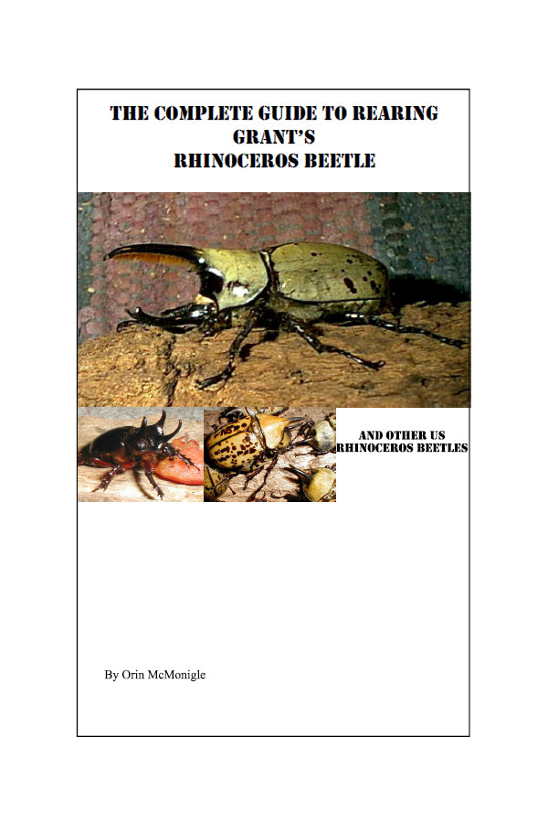 The Complete Guide to Rearing Grant's Rhinoceros Beetle