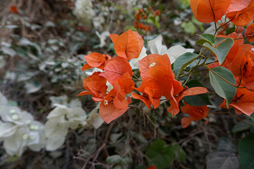 photo of flowers growing at winery in Negev by Jill Tarabar for JiSTdesigns