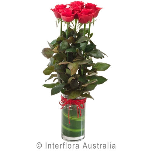 6 Red Roses In Glass Cylinder Vase