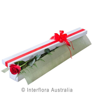 Valentines Long Stem Single Rose in Presentation Box