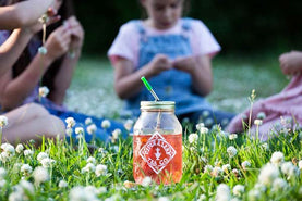 A quart jar of pink iced tea in a field of clover flowers
