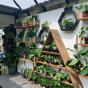 A wall filled with different types of plants and succulents