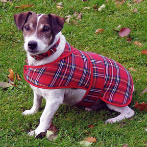 Royal Stewart Tartan Dog Coat - Large