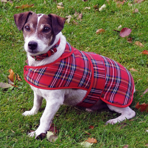 Royal Stewart Tartan Dog Coat - Small