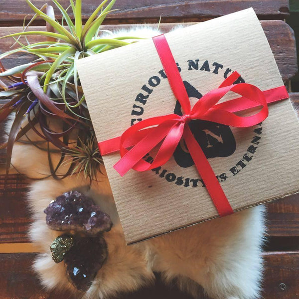Curious Nature's Top 10 Gift Ideas - Curious Nature