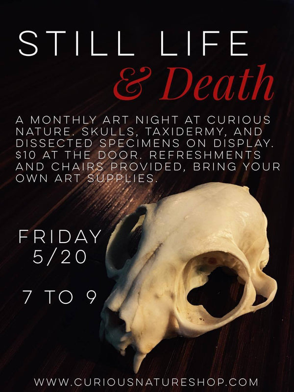 Still Life & Death Art Night - Curious Nature