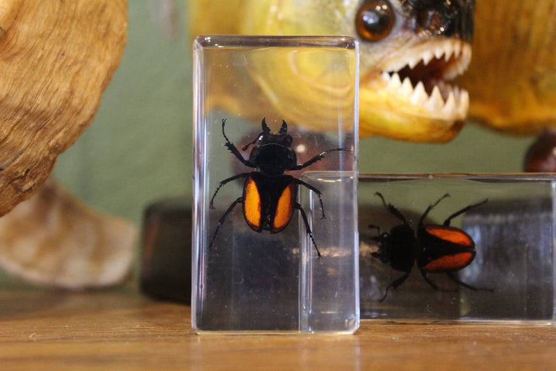 Small Invertebrate Paperweights - Curious Nature