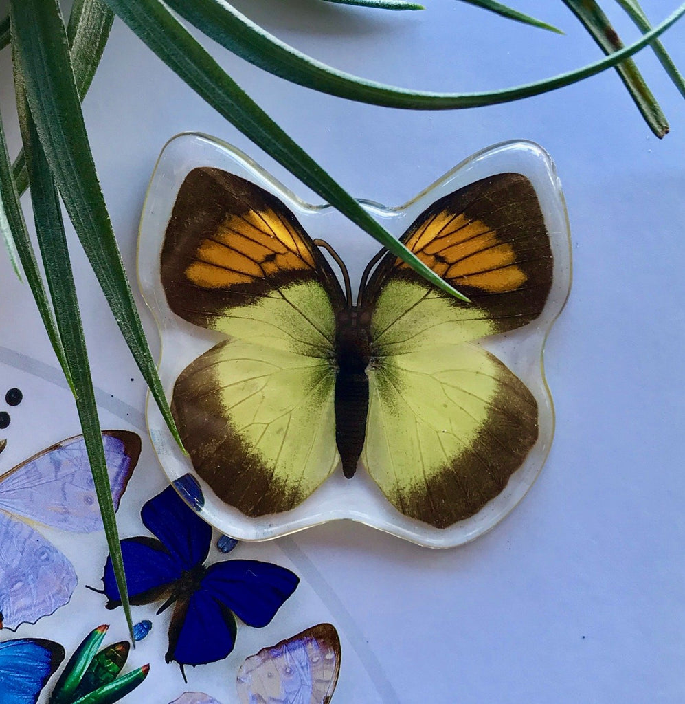 Yellow Orange Tip Butterfly Magnet