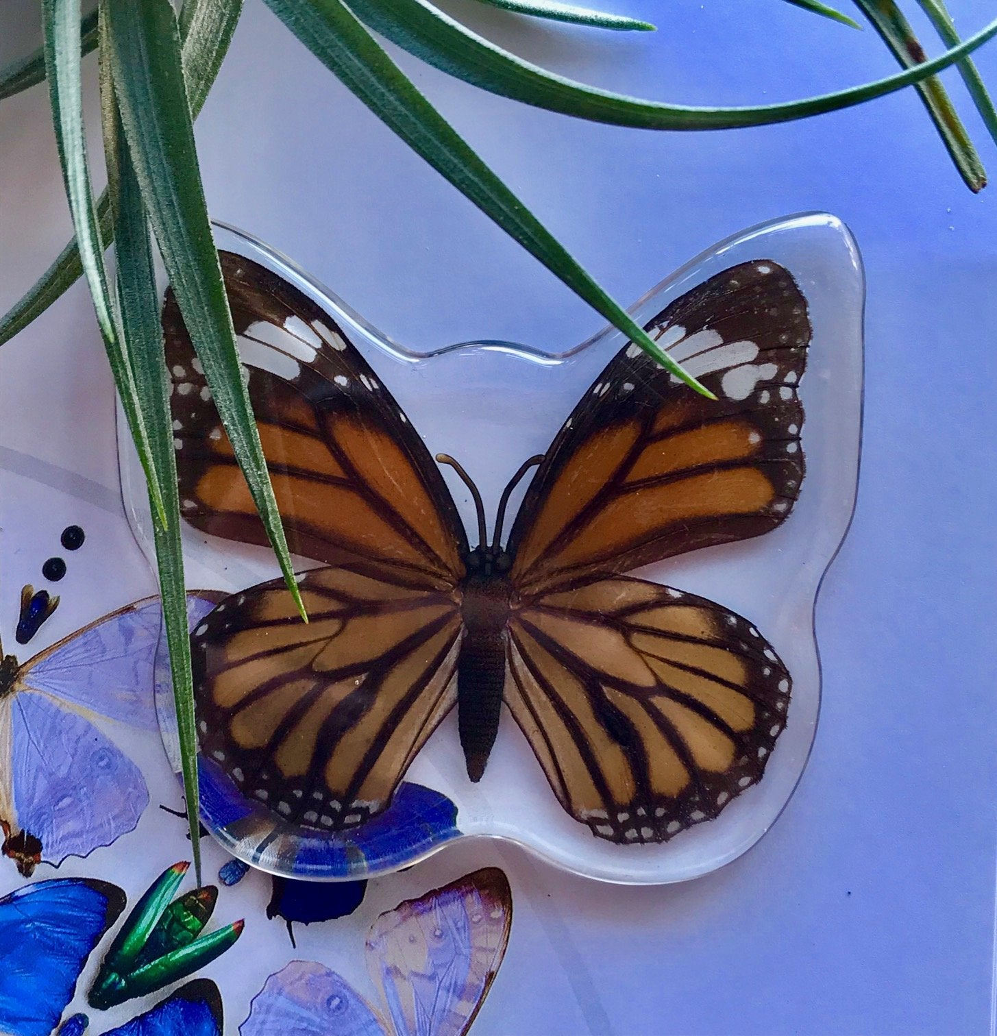 Common Tiger Butterfly Magnet