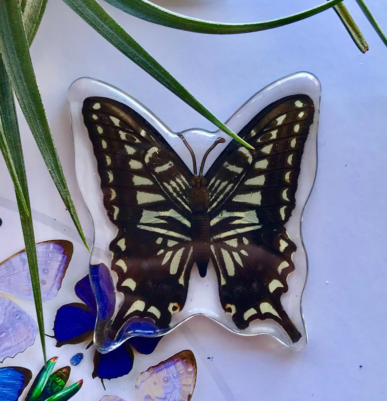 Asian Swallowtail Butterfly Magnet