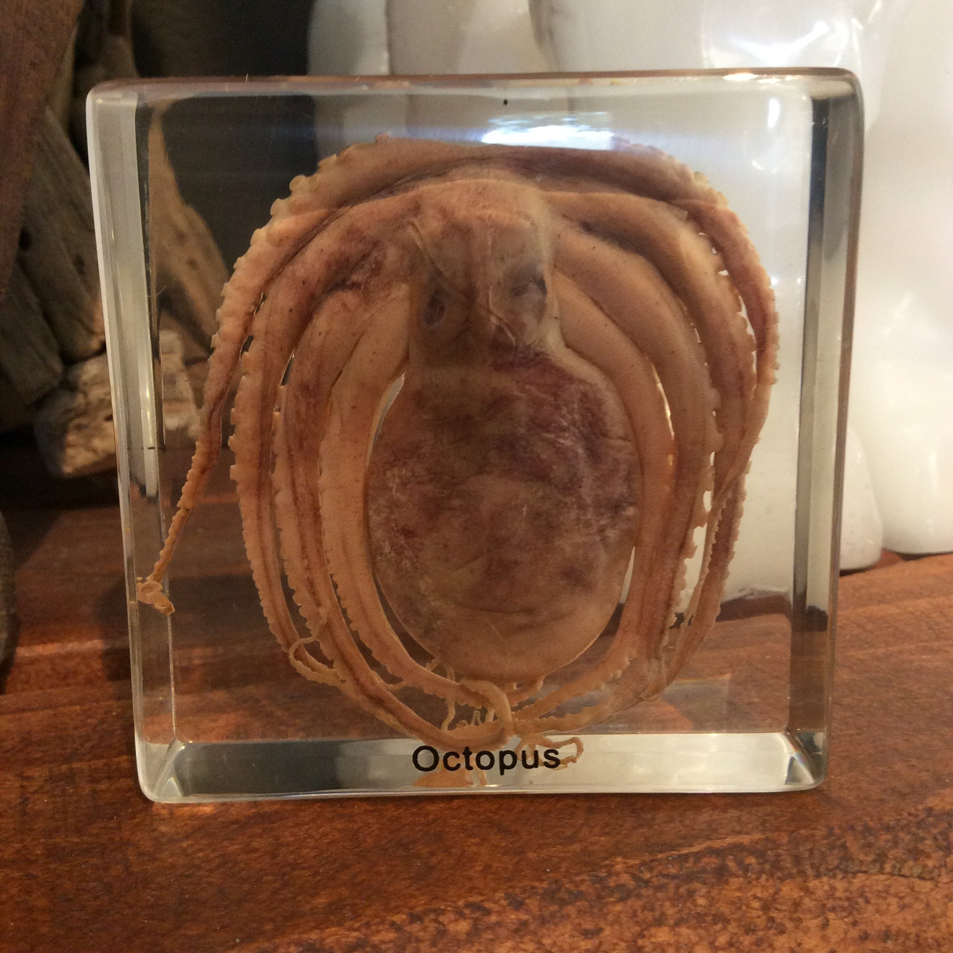 Octopus Paperweight