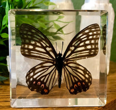 Red Ring Skirt Butterfly Paperweight