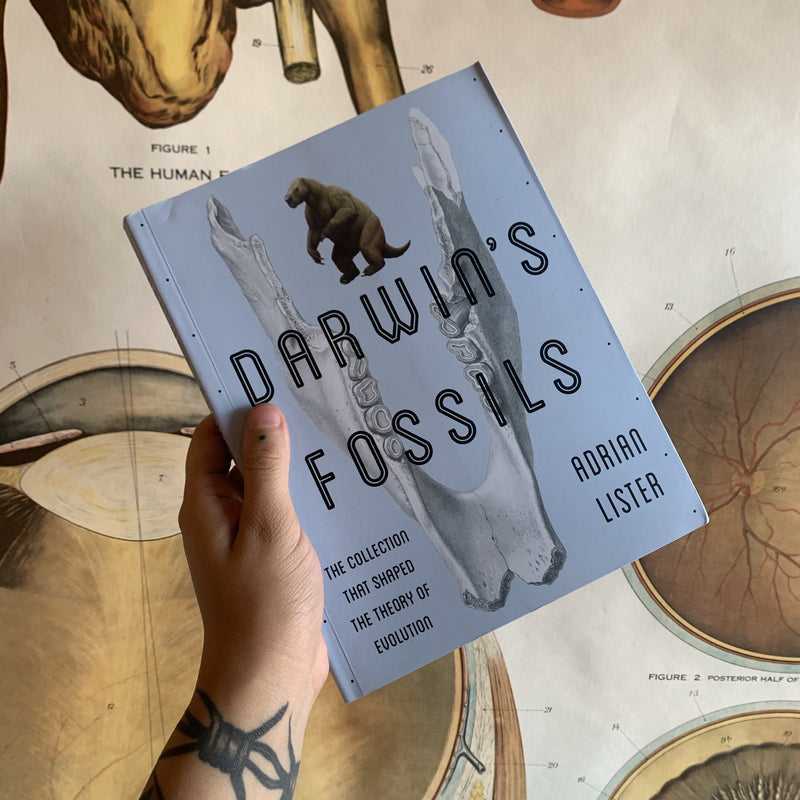 Darwin's Fossils by Adrian Lister - Curious Nature