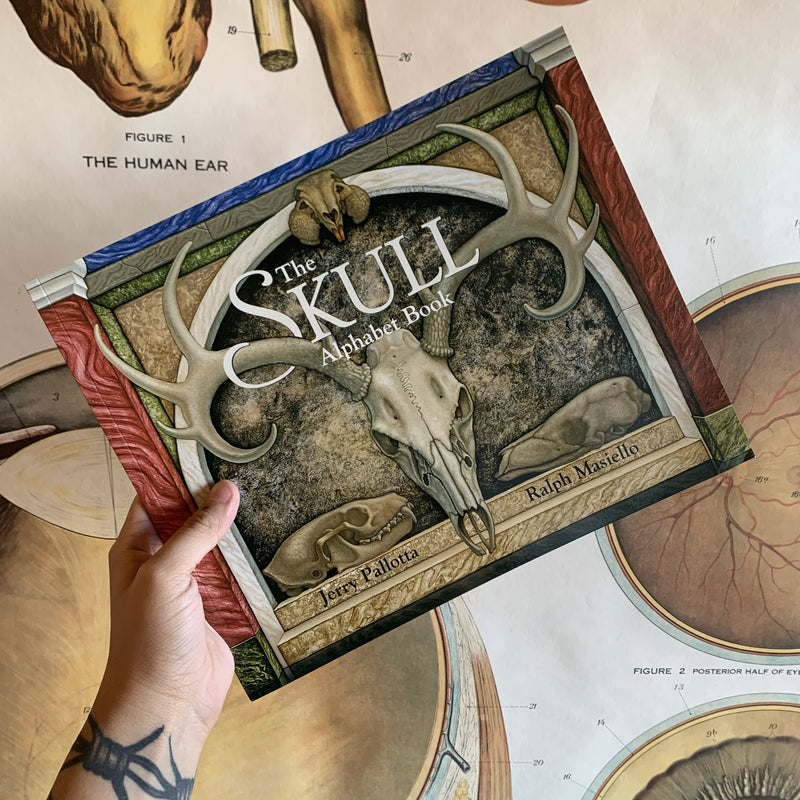 The Skull Alphabet Book By Jerry Pallotta and Ralph Masiello - Curious Nature