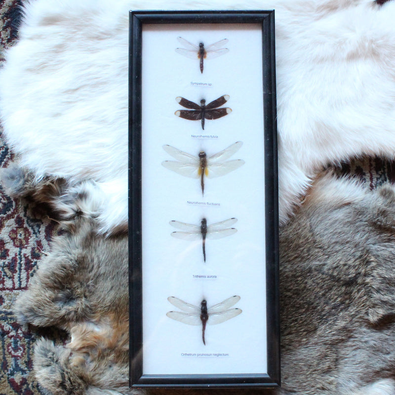 Ryker Mounted Dragonfly Set