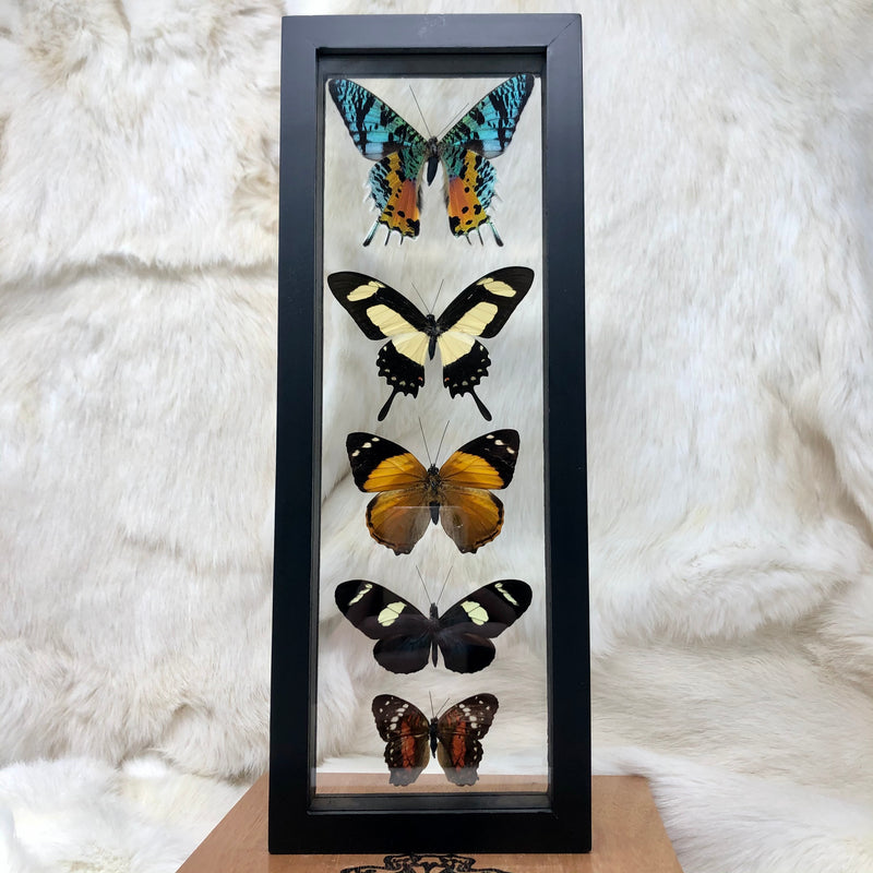 Double Glass 5 Assorted Butterflies
