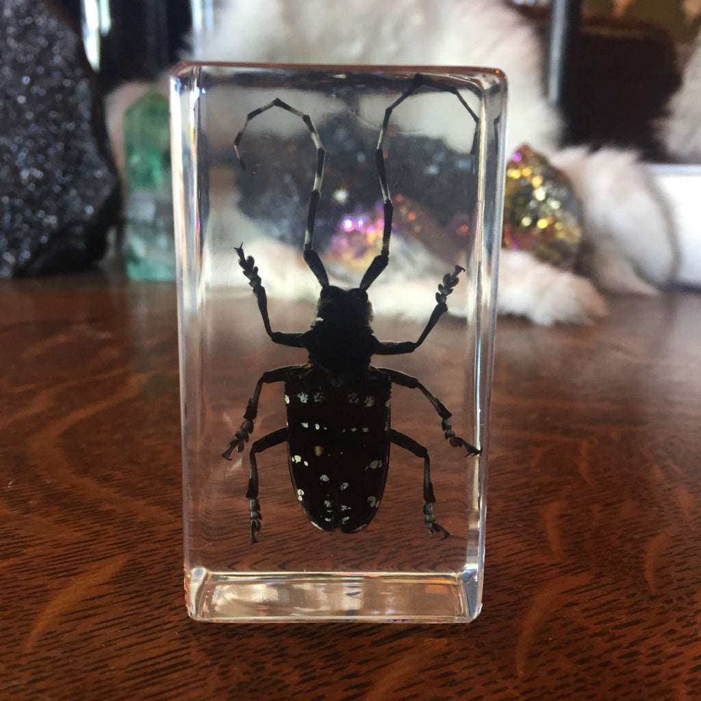 Asian Longhorned Beetle Paperweight