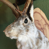 Taxidermy Jackalope