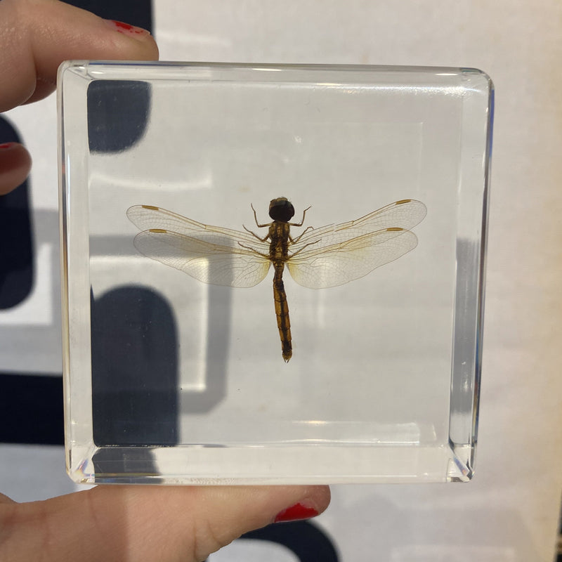Dragonfly Paperweight - Curious Nature