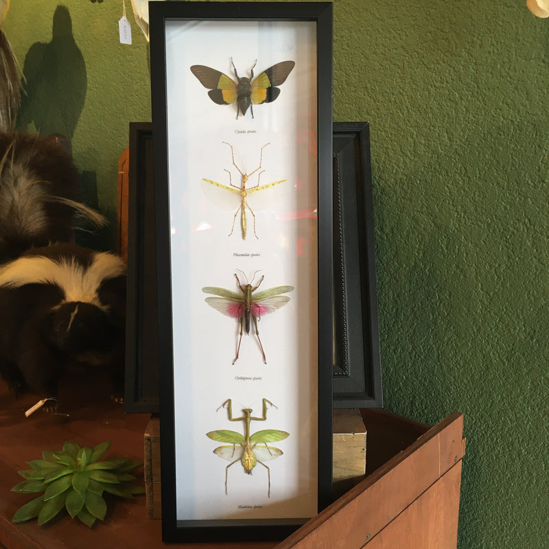 Framed Four Assorted Insects