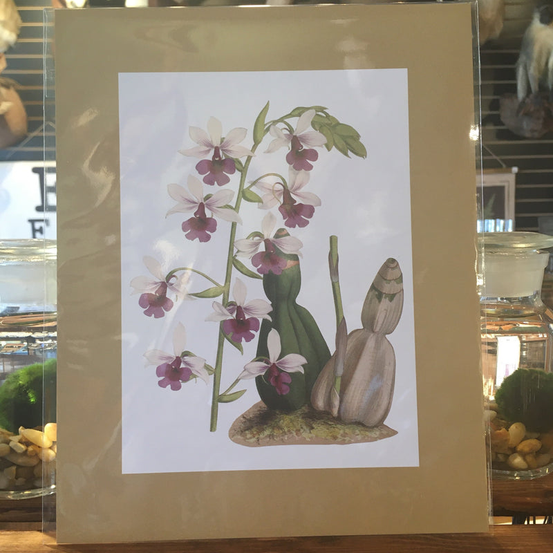 Orchid Flower Prints - Curious Nature
