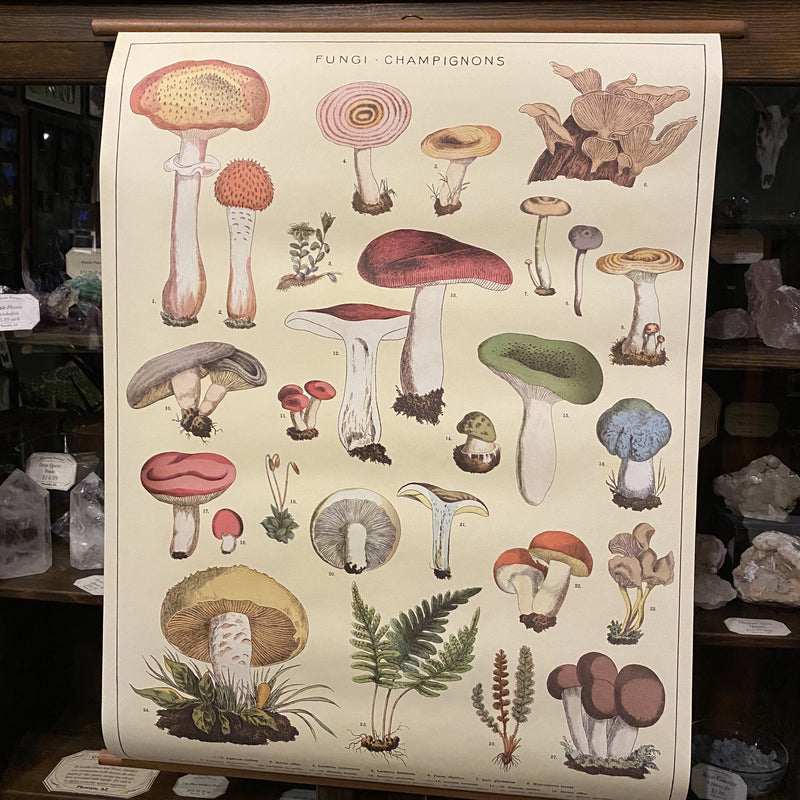 Vintage School Chart - Mushrooms - Curious Nature