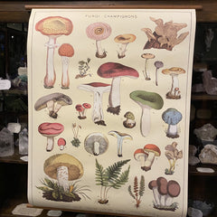 Vintage School Chart - Mushrooms